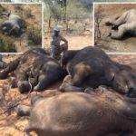 Nearly NINETY elephants FOUND killed near wildlife sanctuary