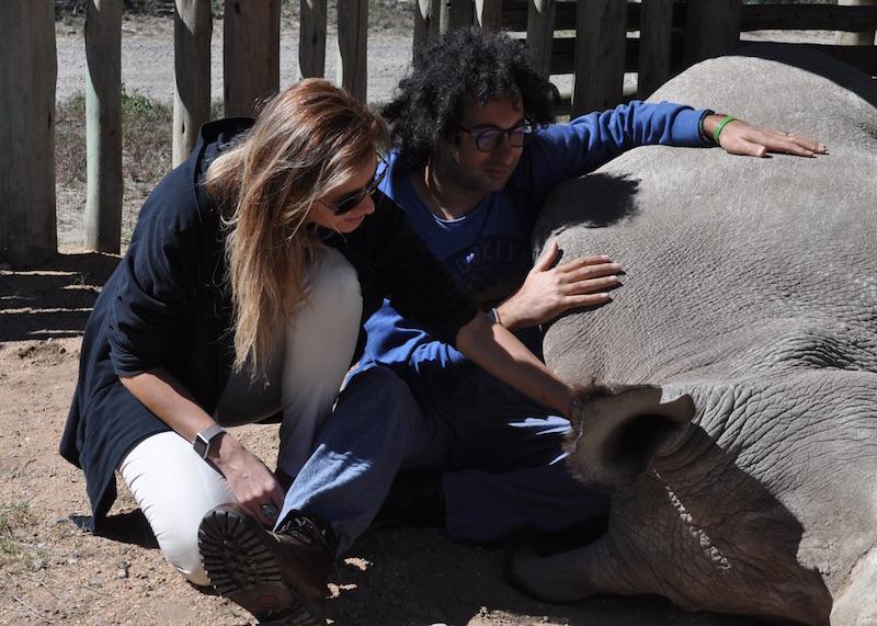sudan the last northern white rhino kenya happier animals